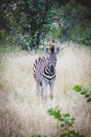 moniquedecaro-kings-camp-south-africa-5710