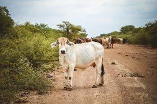 moniquedecaro-madikwe-hills-6944