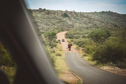 moniquedecaro-madikwe-hills-6990