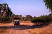 Afternoon safari drive