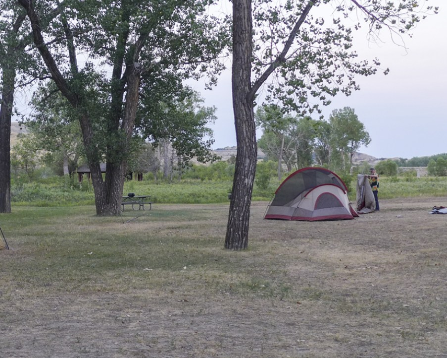 Single tent in camp area near tree and pasture