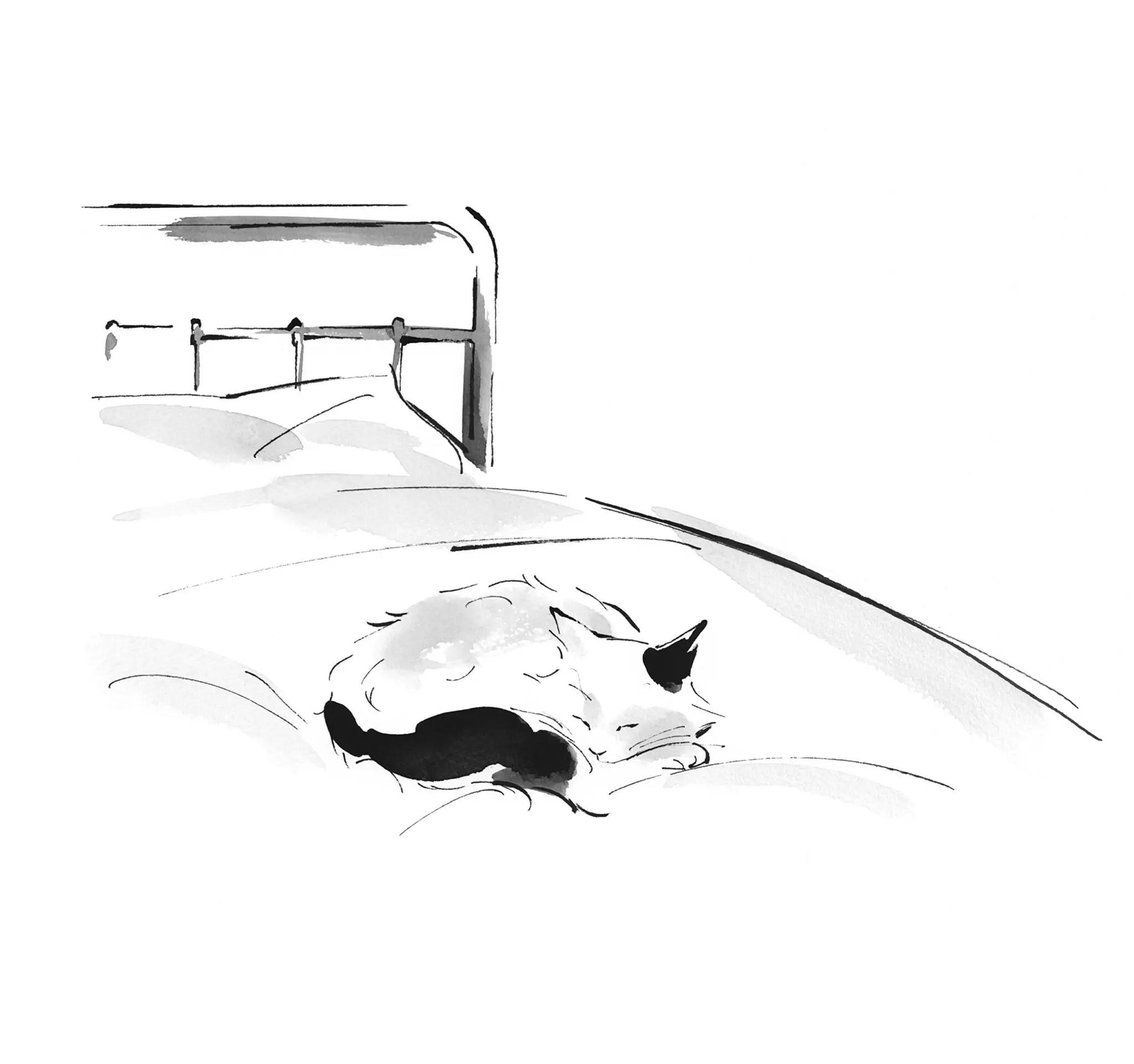 travelling cat int 2