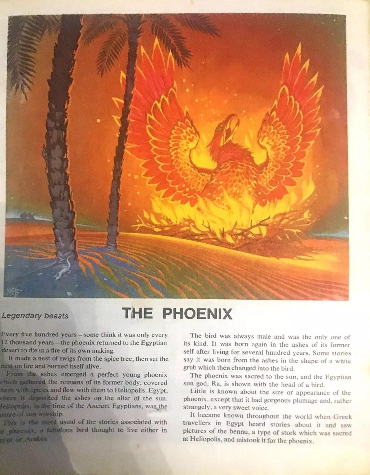 Finding Out 16 4 McBride Beasts Phoenix crop