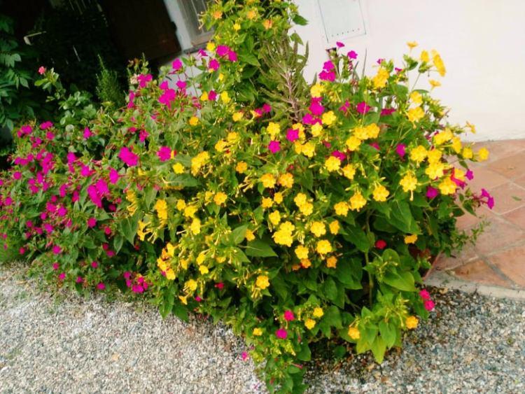 Bella di notte con fiori monocolore. Credito foto Lia Iorizzo