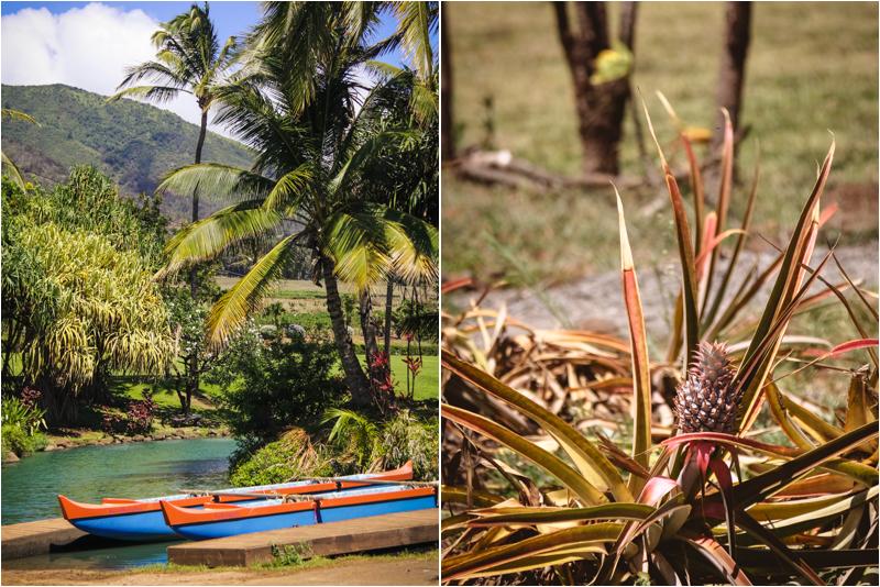 Botanic Gardens of Maui - Maui Tropical Plantation