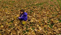 Fall Leaves in Belgrade Serbia - by Anika Mikkelson - Miss Maps