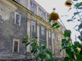 Sunny Flowers and Gray in Kamianets-Podilskyi - Photo by Anika Mikkelson, MissMaps.com