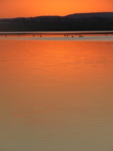 Flamingos feast at sunset on Larnaca's Salt Lake - by Anika Mikkelson - Miss Maps - www.MissMaps.com