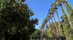 Oranges and Palms in Nicossia, Cyprus - by Anika Mikkelson - Miss Maps - www.MissMaps.com