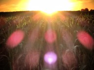 Sunrise over the cornfields at Home in Minnesota - by Anika Mikkelson - Miss Maps - www.MissMaps.com