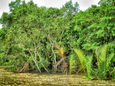 Welcome to the Sundarbans of Bangladesh - by Anika Mikkelson - Miss Maps - www.MissMaps.com