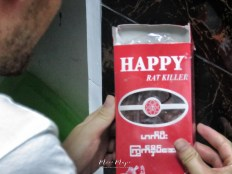 Happy Rat Killer - Yangon Myanmar - by Anika Mikkelson - Miss Maps - www.MissMaps.com