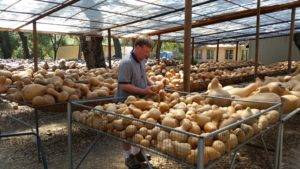 Purchasing Gourds at Welburn Gourd Farm