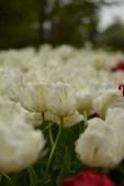 April 2014, visit at Keukenhof Gardens