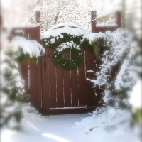 Escape To 'NARNIA' In A Winter's Garden...