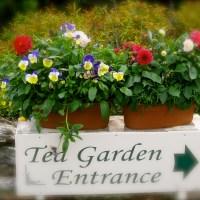 The Tea Garden