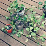 What my dying plants taught me about self care