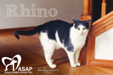 Rhino the Cat