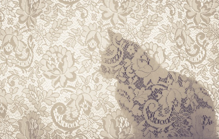 beautiful-life-gallery-cats-100