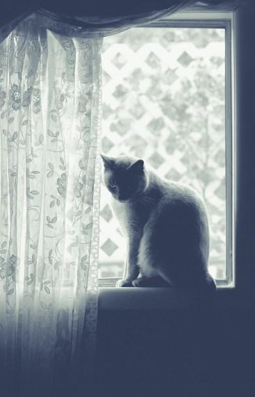 beautiful-life-gallery-cats-101