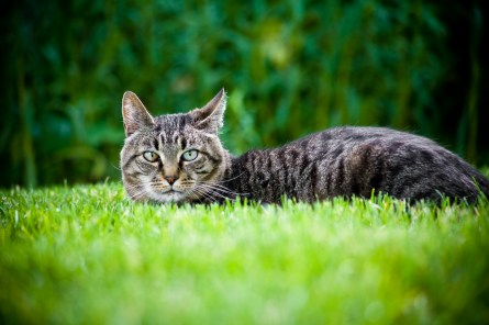 beautiful-life-gallery-cats-10315