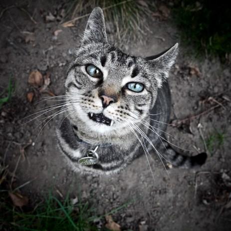 beautiful-life-gallery-cats-1060513