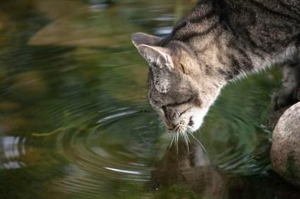 beautiful-life-gallery-cats-1075794