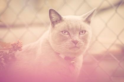 beautiful-life-gallery-cats-108