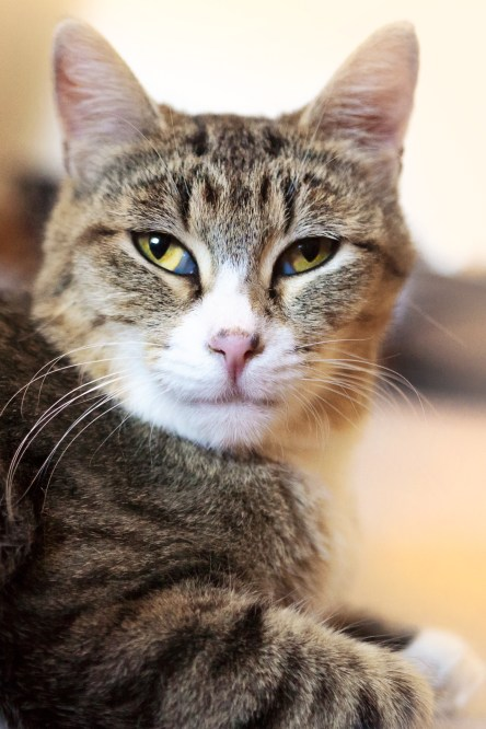 beautiful-life-gallery-cats-117