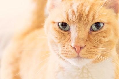 beautiful-life-gallery-cats-122