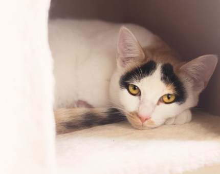 beautiful-life-gallery-cats-142