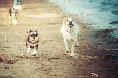 I'll race you!