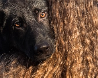 Hair & fur.