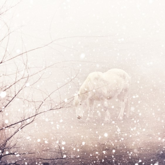 White horse in a winter snow storm