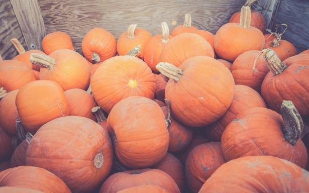 A pile of newly harvested pumpkins