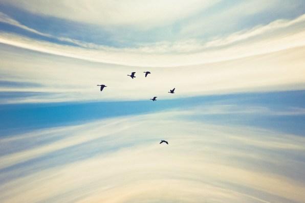 Fly In The Sky