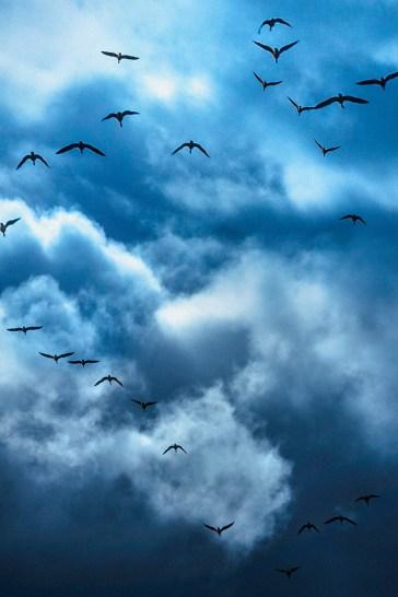 Heaven's Doves