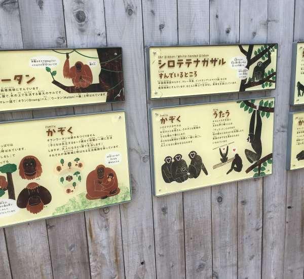 オランウータンの生態
