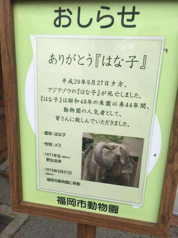 福岡市動物園ぞうさんがいない事件_R