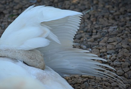cleaning under one wing