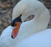 feathers on the beak