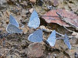 group of small butterflies