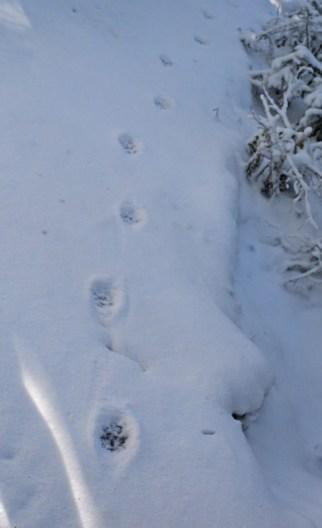 larger tracks