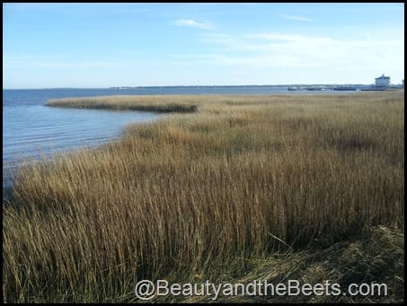 Charleston marsh land