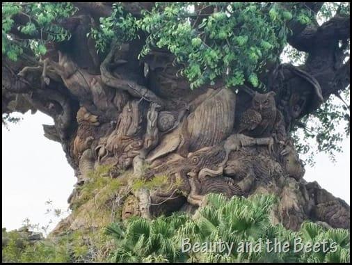 Tree of Life Animals Disney Animal Kingdom Beauty and the Beets