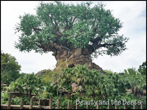 Tree of Life Disney Animal Kingdom Beauty and the Beets