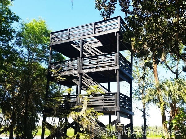 Magnolia Plantation Gardens Wildlife Tower Beauty and the Beets