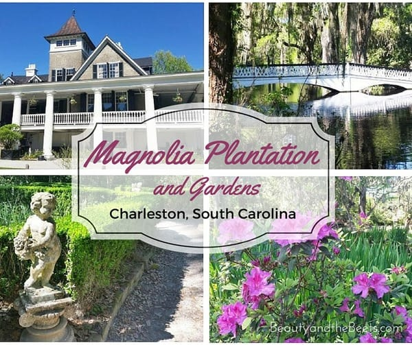 Magnolia Plantation and Gardens Beauty and the Beets (1)