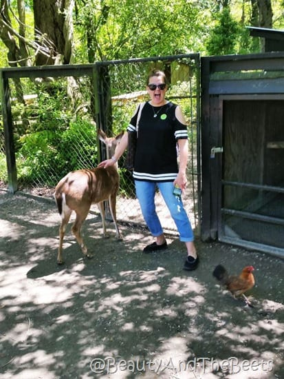 deer and roosters Magnolia Plantation Beauty and the Beets