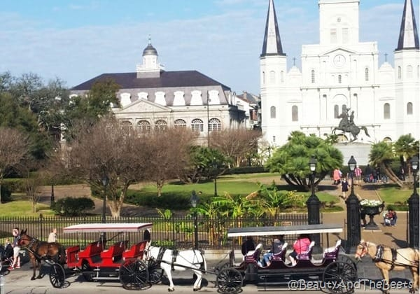 Horse carriages Jackson Square New Orleans Beauty and the Beets